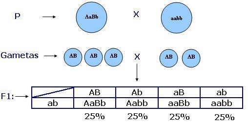 equilibrio genetico: