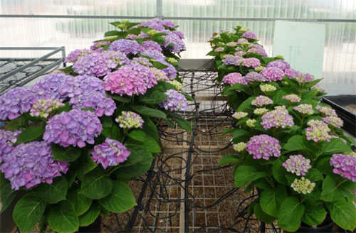Fotoperiodismo bot nica col gio web for Diferentes plantas ornamentales