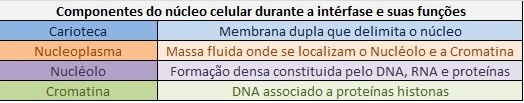 estrutura-do-nucleo-interfase