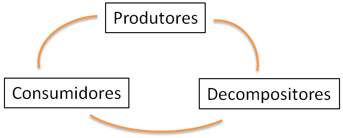 produtores, consumidores e decompositores.
