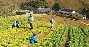 Agricultura familiar em alta