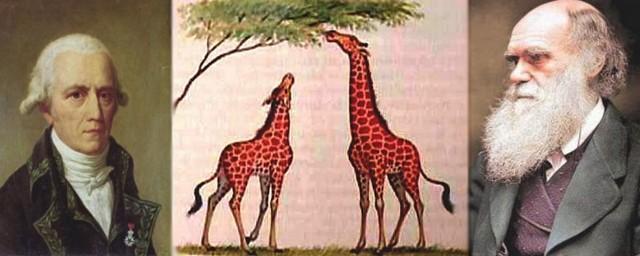 Darwin Lamarck