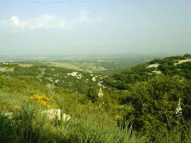 Mediterranea Vegetação