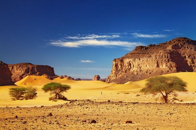 Vegetação Deserto
