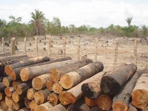 ambiente-natural-ambiente-modificado