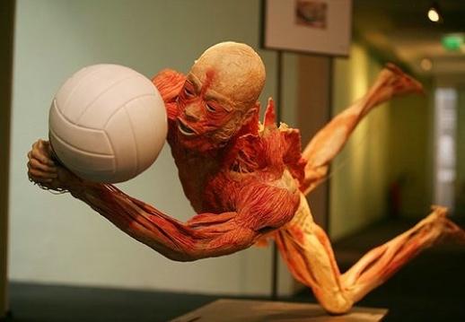 O que é tecido muscular? - Curiosidades - Colégio Web