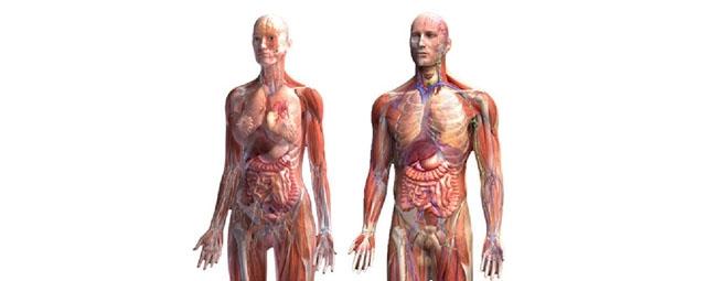 Fisiologia Saúde