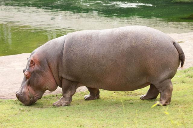 Animais mais mortíferos do mundo
