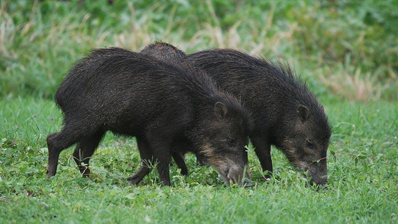 Unesp realiza estudo para entender melhor a movimentação de animais selvagens 2