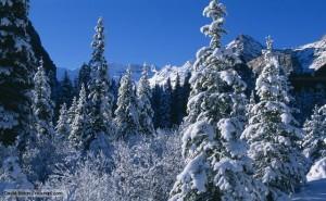 Winter snow scene near Lake Louise, Rockies, Banff National Park, Alberta, Canada