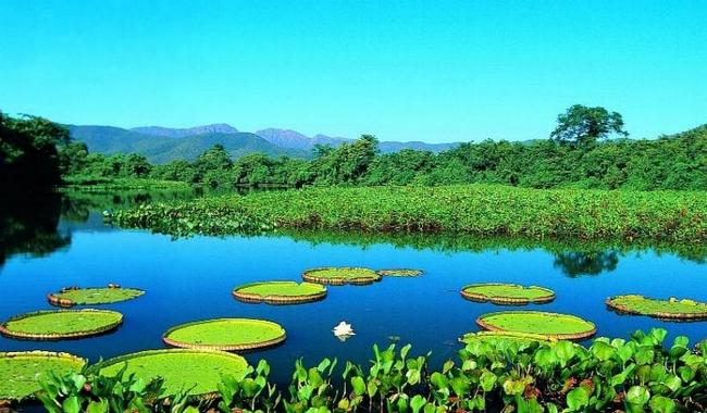 Biomas e vegetação do Brasil