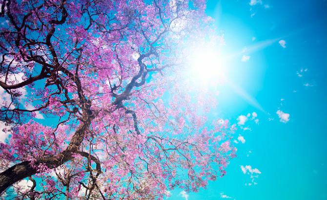 Histórias e curiosidades da Primavera