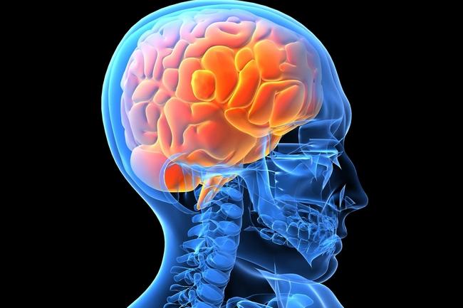 Origem e detalhes da neurociência