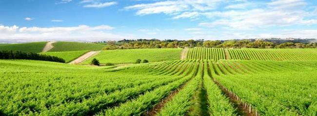 Agricultura Engenharia