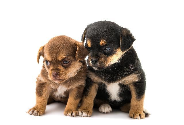 Como Cuidar de Filhotes Cachorro