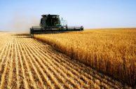 Saiba mais sobre a carreira em Agroecologia