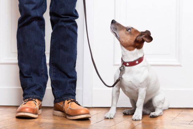 Como ensinar cachorros