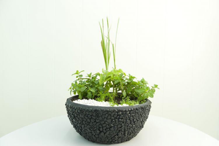 Como plantar chás casa