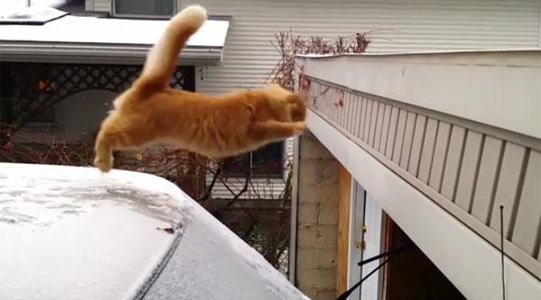 Gatos sempre caem em pé