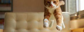 Gatos sempre caem pé
