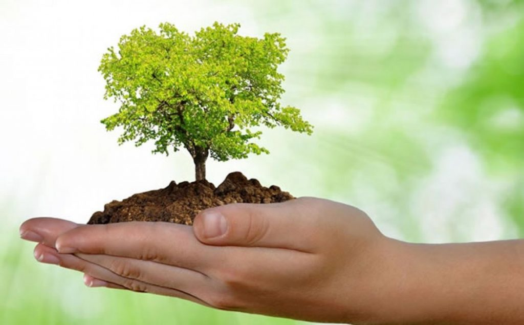 dia-mundial-do-meio-ambiente-2