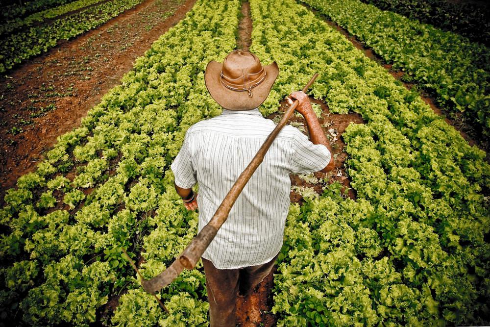 dia-do-agricultor
