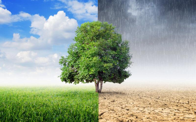 Estado nos EUA quer incluir ensino sobre mudanças climáticas nas escolas