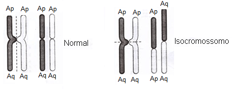 Isocromossomos