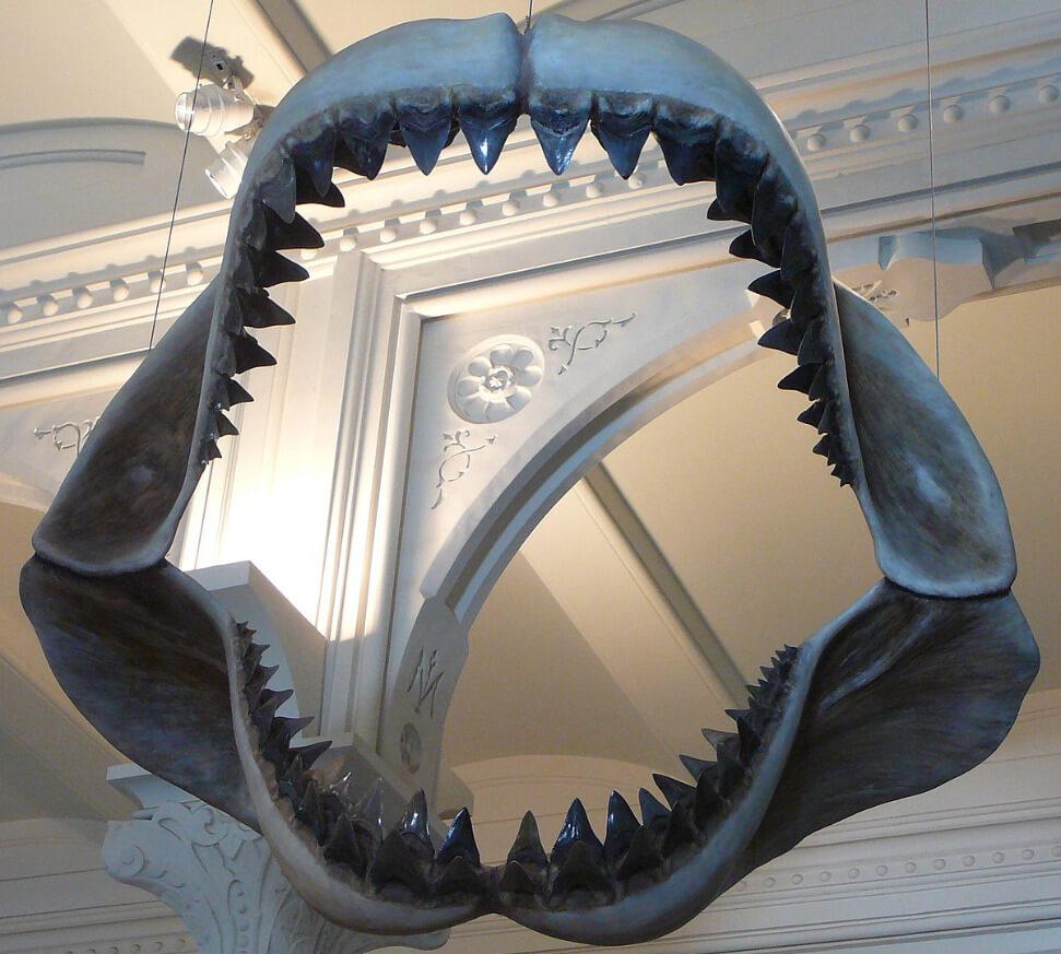 Confira algumas curiosidades sobre Megalodon, o tubarão gigante!