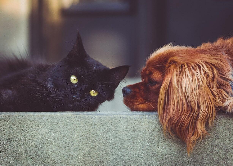 Pesquisa indica que pets podem aliviar estresse de isolamento na pandemia